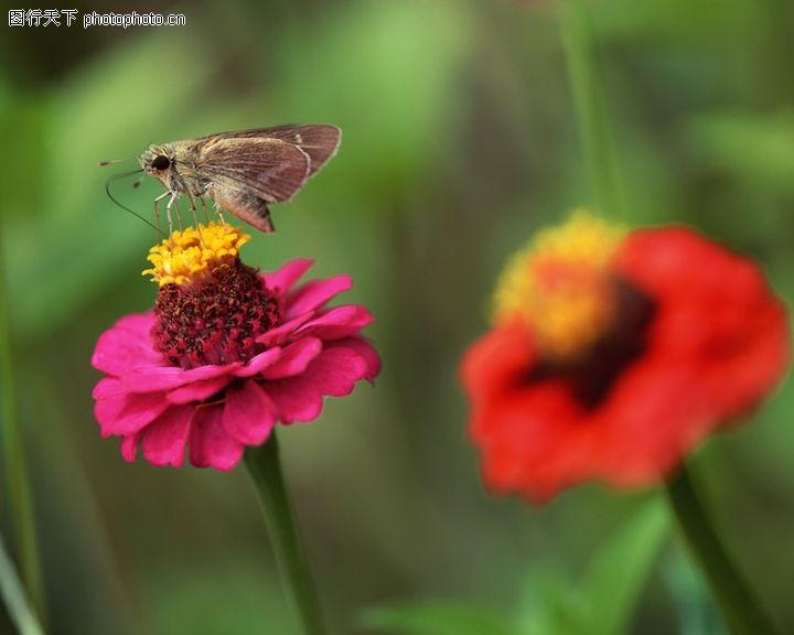 花草世界0090 花草世界图 自然风景图库 蝴蝶 鲜花 采蜜
