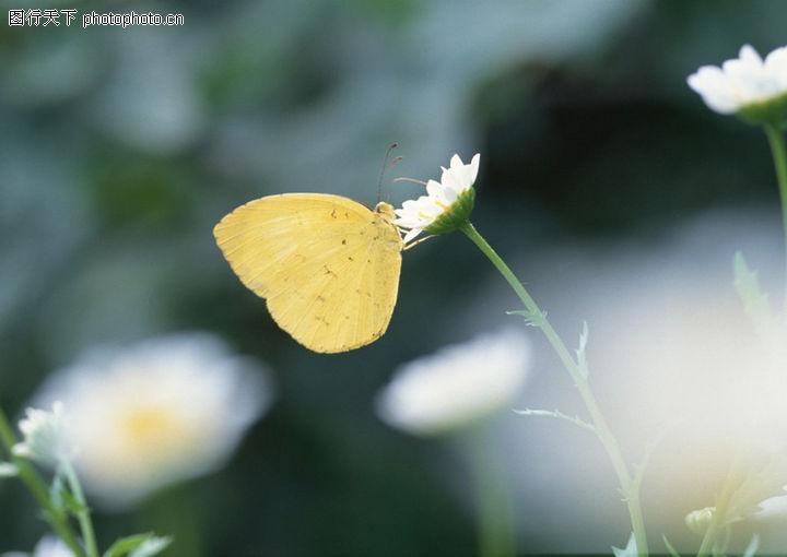 花草世界0218 花草世界图 自然风景图库 蝴蝶 采花粉 细节