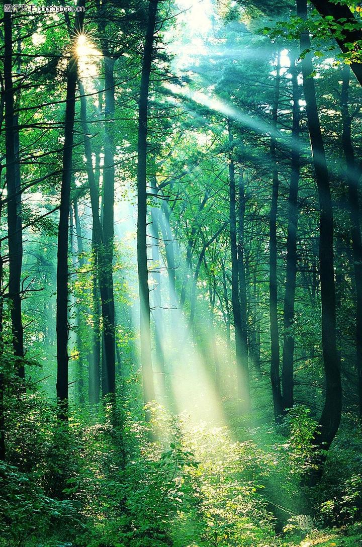 上传图片图标_森林树木0077-自然风景图-自然风景图库-丛林 光线 射入