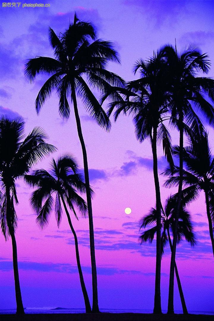 沙滩大海 自然风景 椰树 落日 夏天