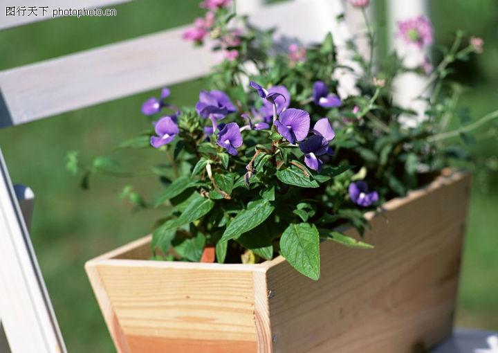 盆栽花的种类及-图 园林图库 盆景 花盆