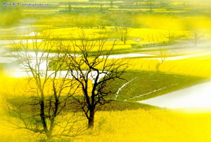 民间风情,中华图片,树枝 河流 干枯,民间风情0049