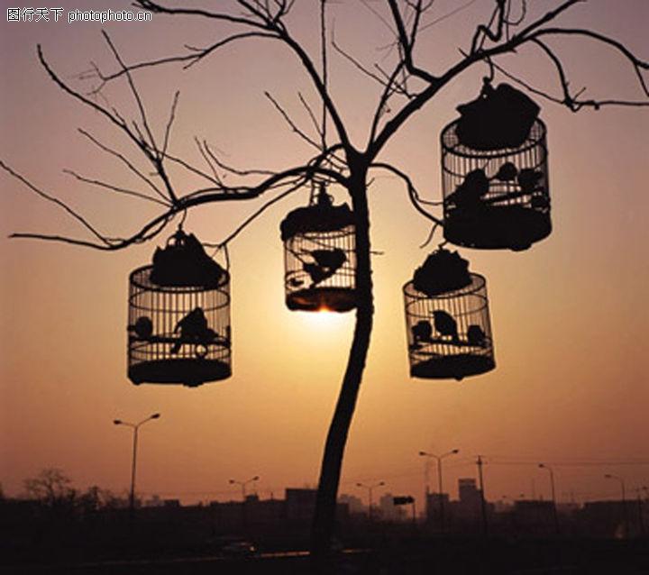 抽象物品,抽象,枯枝 悬挂 鸟笼 夕阳 晚霞,抽象物品0012