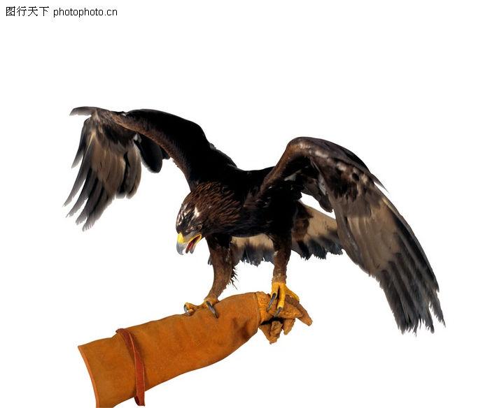 昆明海鸥_鸟的世界0007-动物图-动物图库-刀套 乌鸦 爪子 抓紧 飞翔