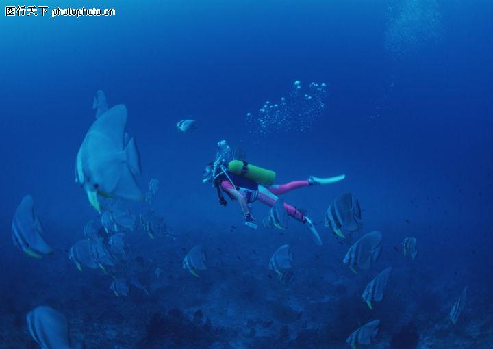 水底天堂,动物,海底世界 海洋开发 生命物种,水底天堂0117