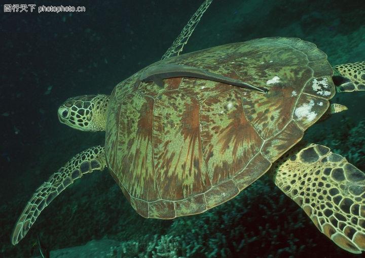 水底天堂,动物,海龟 坚硬 龟壳,水底天堂0207