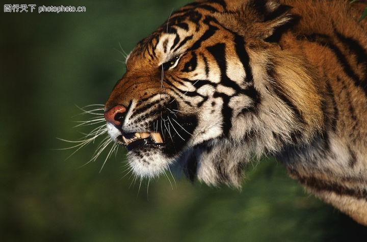 世界上最凶猛的动物?