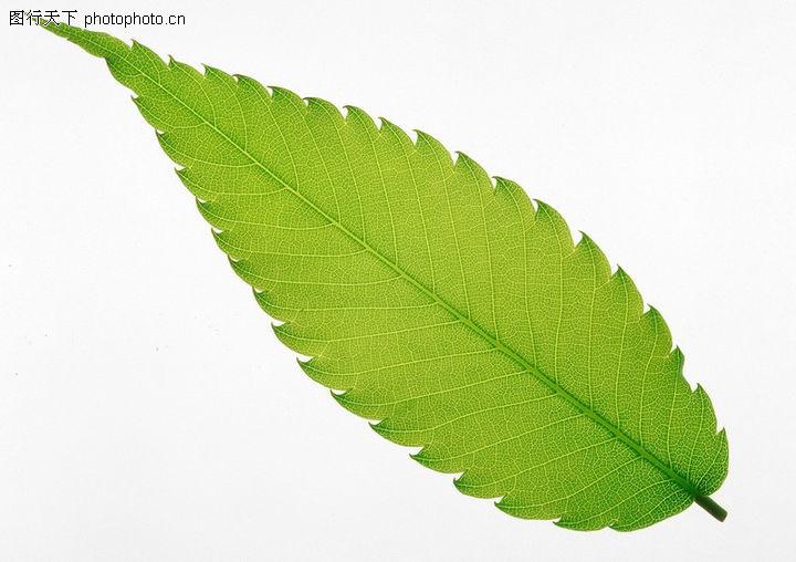 背景 壁纸 绿色 绿叶 树叶 植物 桌面 720_508