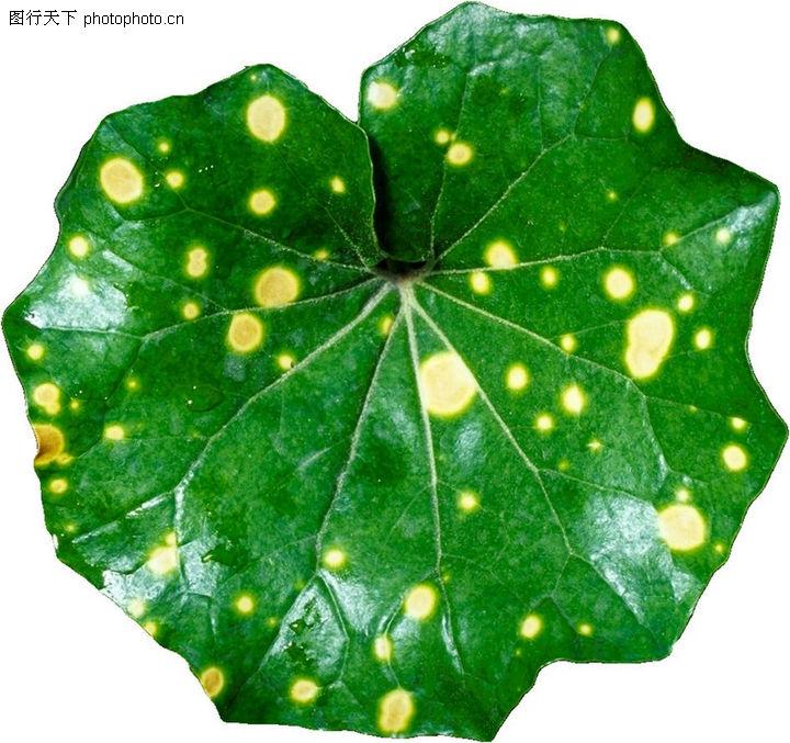 茂盛叶子,自然风景,圆形 斑点 绿油油 生命 养料,茂盛叶子0129