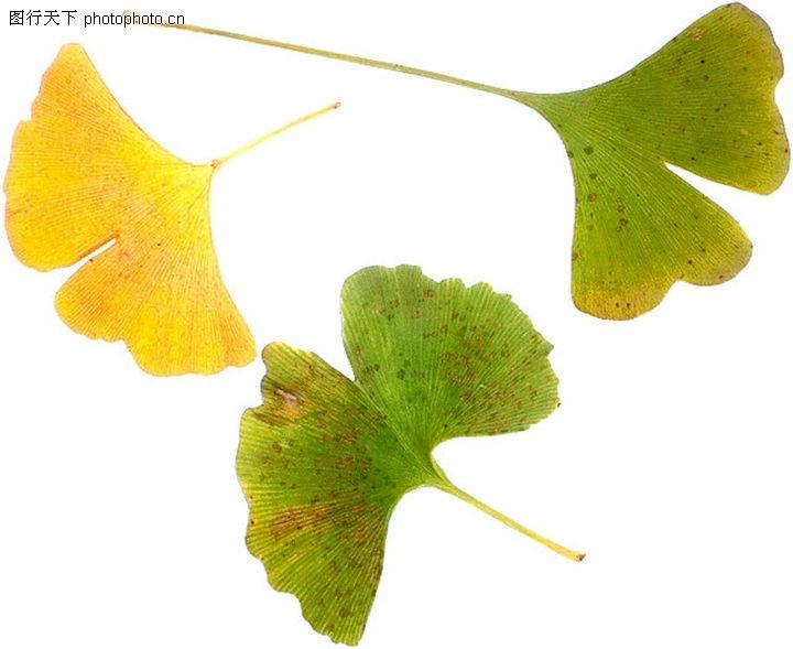 背景 壁纸 绿色 绿叶 树叶 植物 桌面 720_589