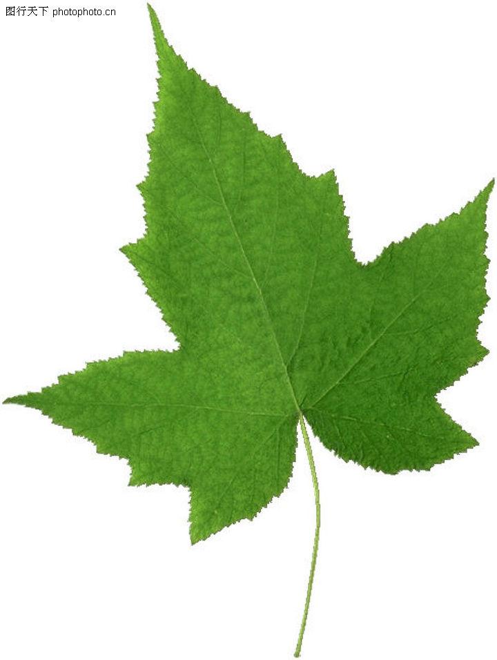 树叶的醒悟  (组图) - 安然 - 轩鼎紫气