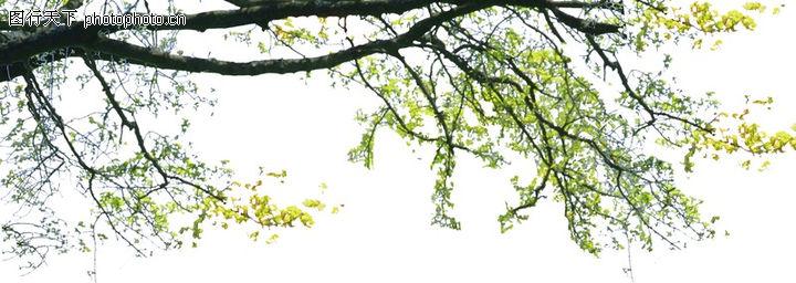 树枝 垂落 枝叶