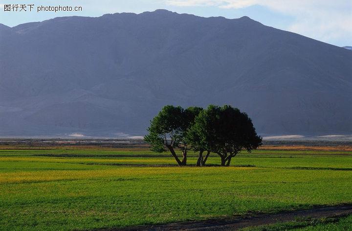 田园风光,自然风景,远处一座山 地上两棵树 平整绿色,田园风光0103