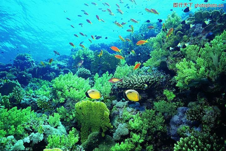 海底世界0026