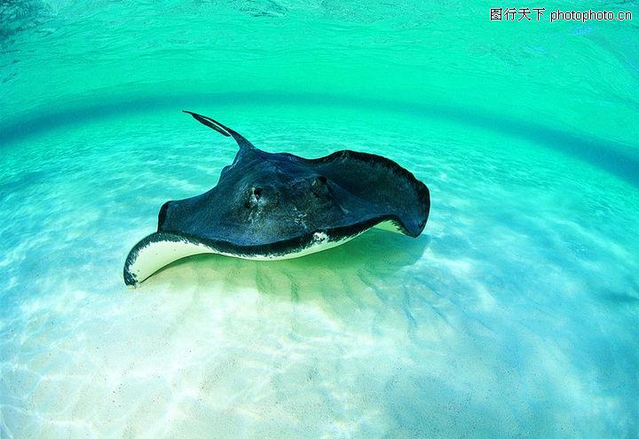 海底世界,动物,乌贼 海洋 生物,海底世界0063