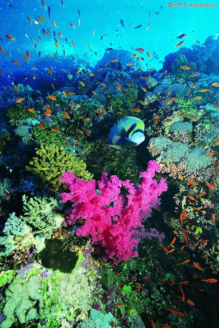 海底世界,动物,多彩海世界
