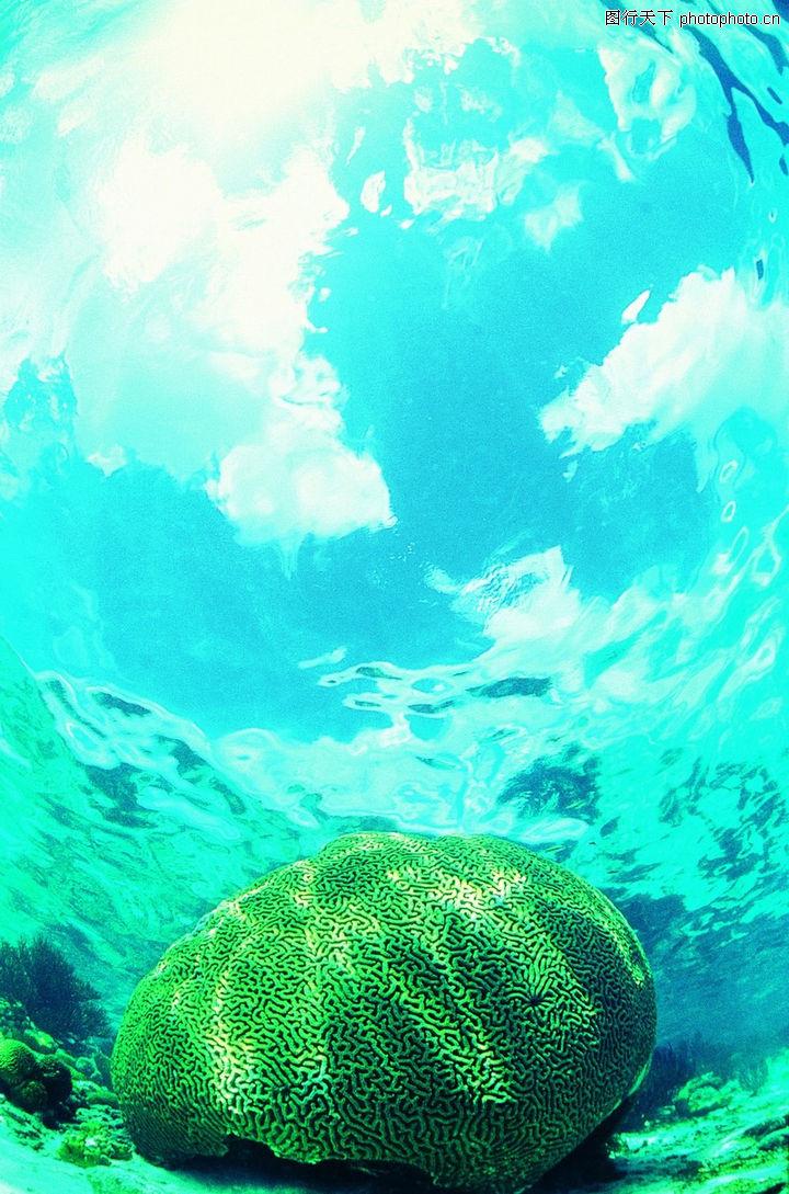 海底世界 动物 通透海水 奇异海生物 圆盘身躯