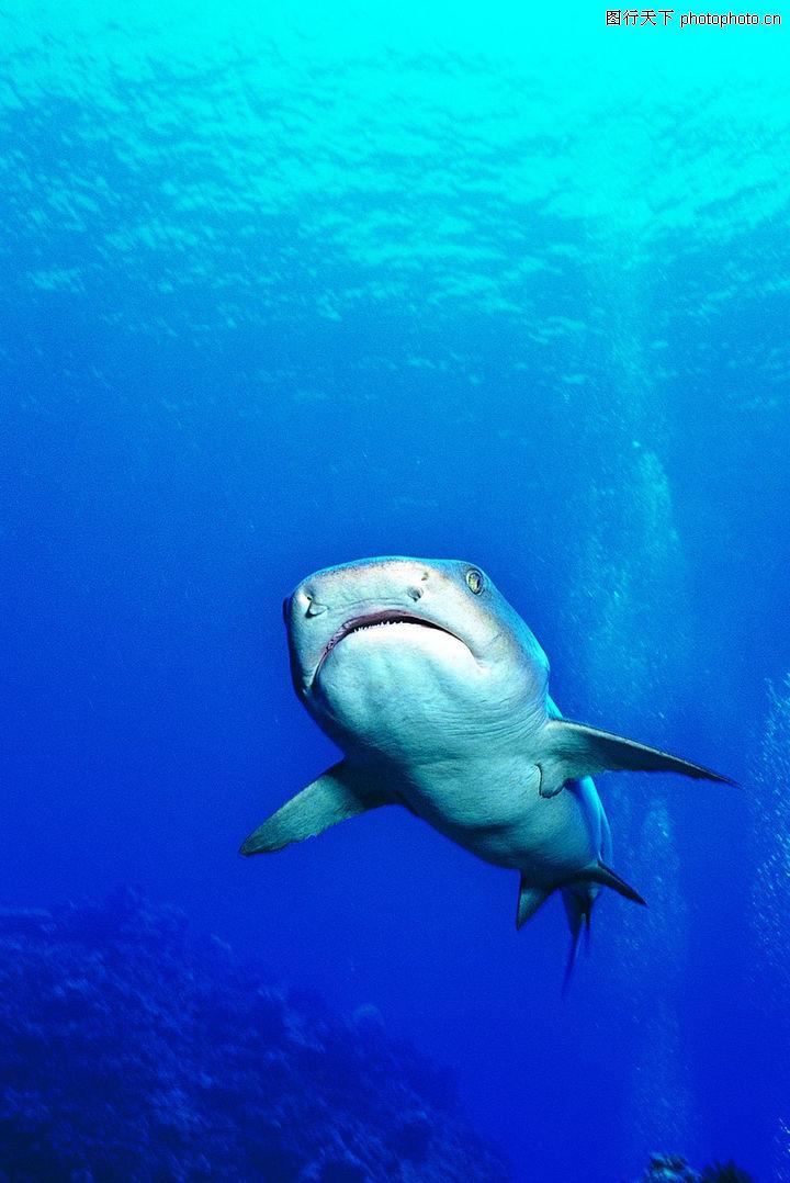 海底世界,动物,海洋生物