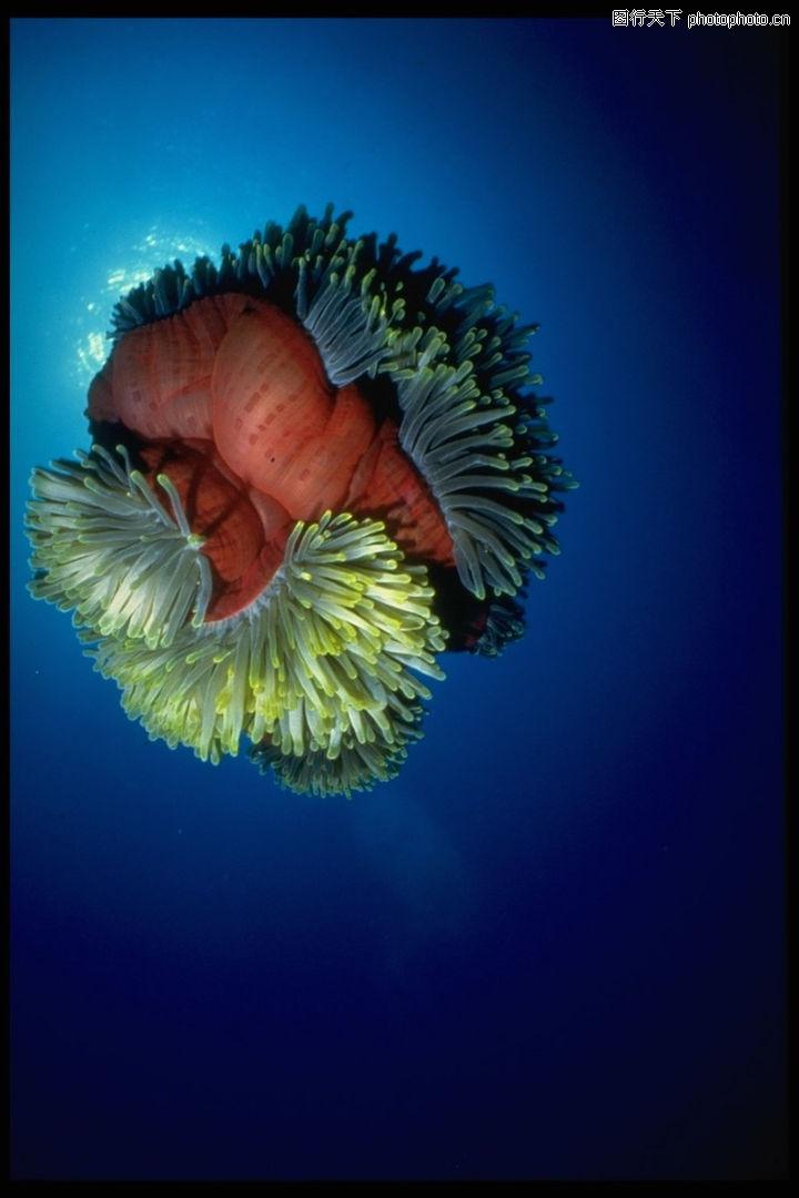 海底世界0192 海底世界图 动物图库 海藻 海底 植物