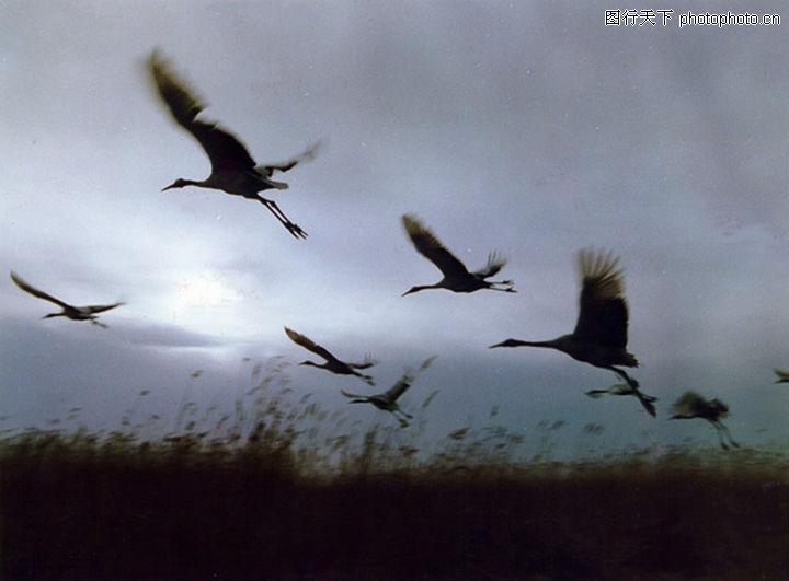 中国图片图库 天空 小鸟 飞翔