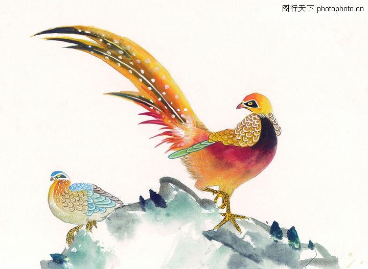 中国吉祥鸟类总汇 - 好友 - 爱的家园