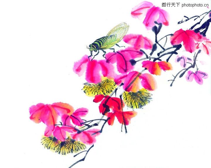 写生花卉图案变形设计