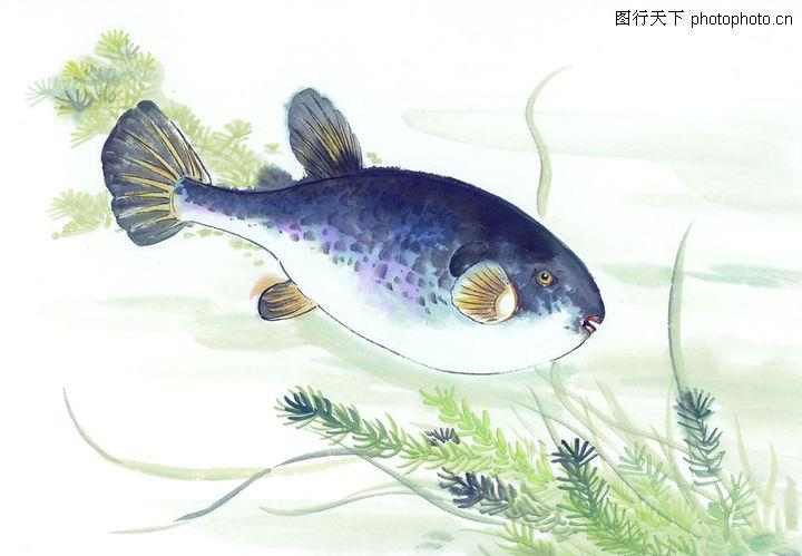水下动物画0035