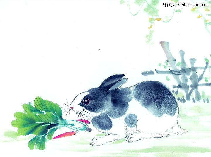 中国动物画,山水名画,白菜,中国动物画0042