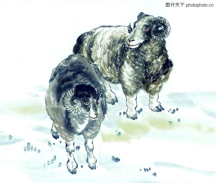 中国动物画,山水名画,绵羊 羊毛 羊角,中国动物画0064