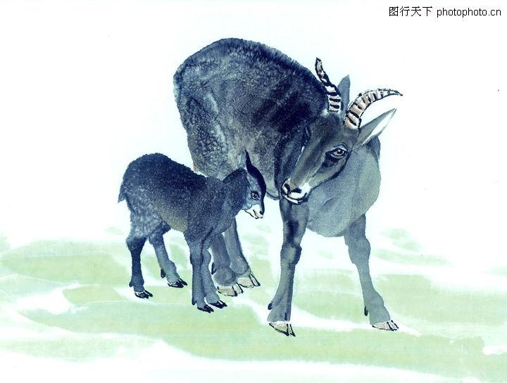 中国动物画,山水名画,羊羔 动物 可爱,中国动物画0066