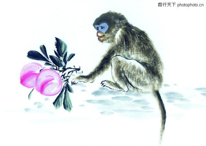 中国动物画,山水名画,长尾 幼猴 红桃,中国动物画0074