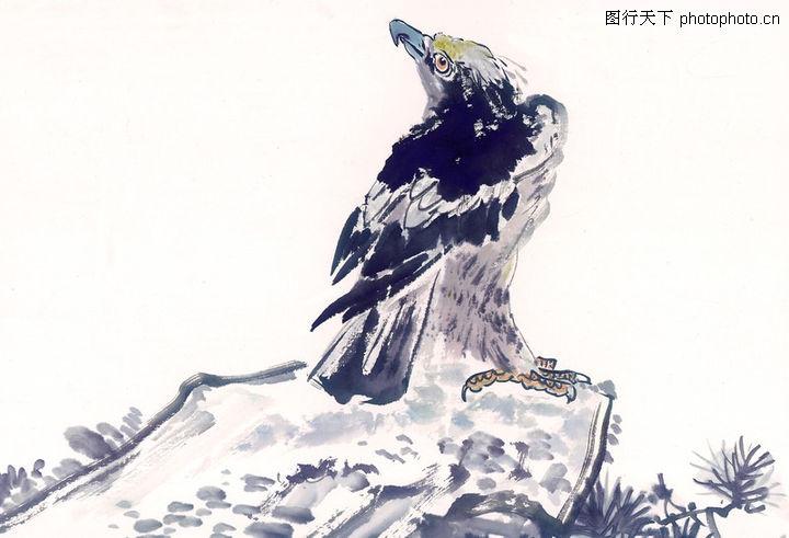 中国动物画,山水名画,一只老鹰 站石头上 头看上,中国动物画0104