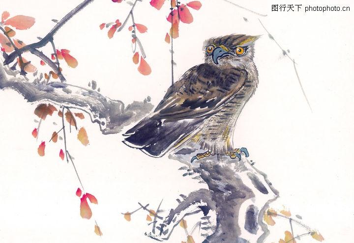 中国动物画,山水名画,猫头鹰 树枝上 眼睛平视,中国动物画0107