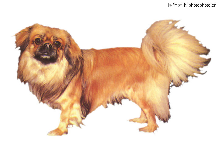 名犬,人物,名犬0010