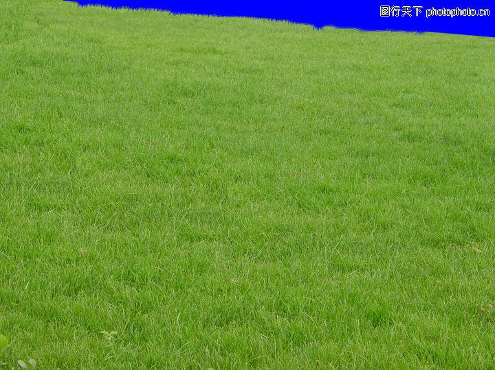 大副草皮 植物 高清图片