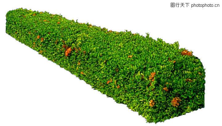 灌木; 灌木丛图片灌木丛 灌木丛简笔画1;