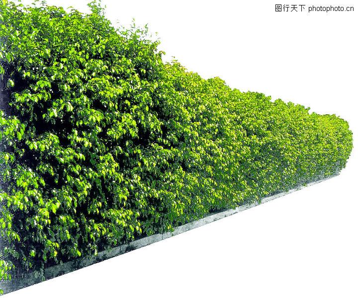 灌木 植物
