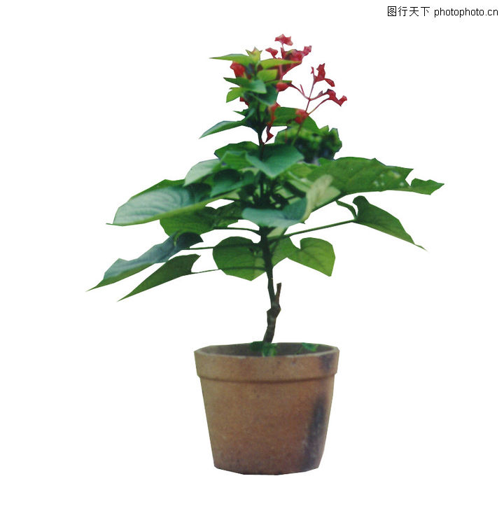 盆栽植物,植物,盆栽植物0223