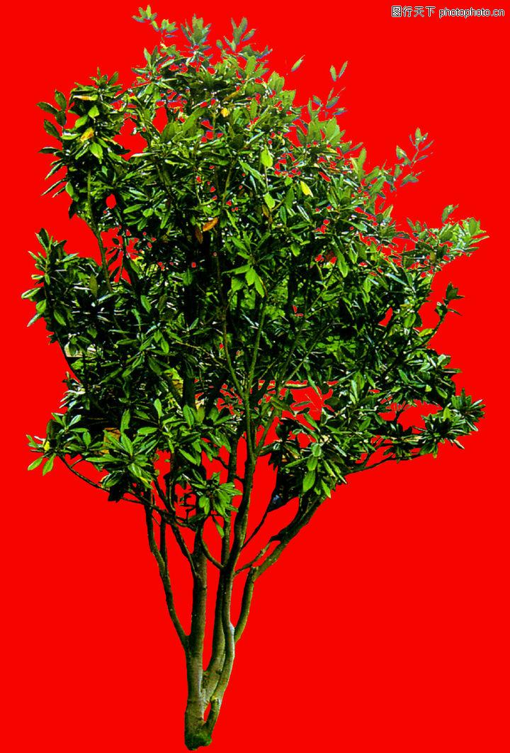 四季阔叶树0053