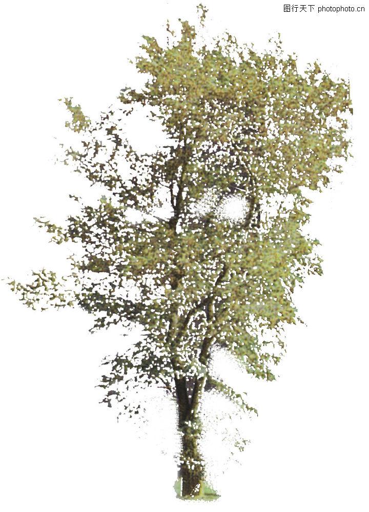四季阔叶树0158