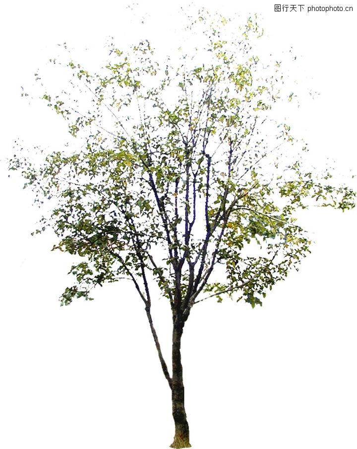 四季阔叶树0167