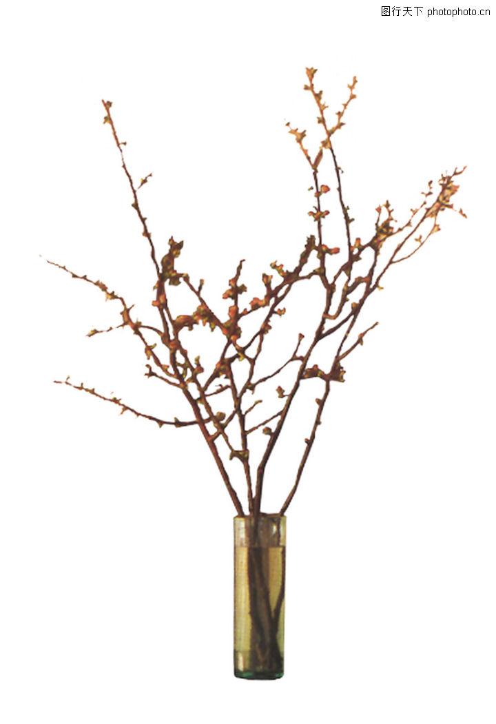 室 546×519 植物名称:南; 室内植物116 -素材世界 - 材质贴图