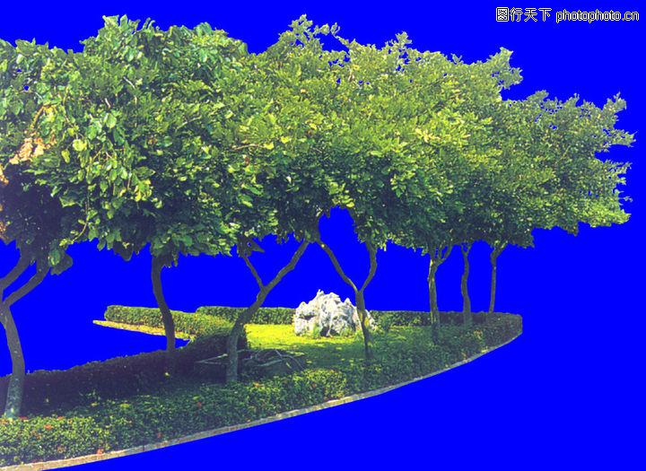 行道树0008