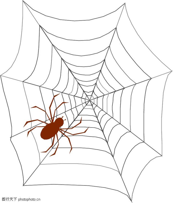 昆虫蝴蝶,动物,蜘蛛网 蜘蛛,昆虫蝴蝶0070