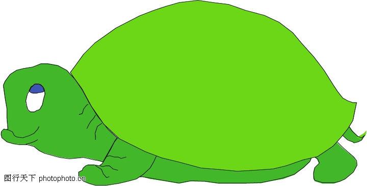 野生动物,动物,绿乌龟,野生动物0018