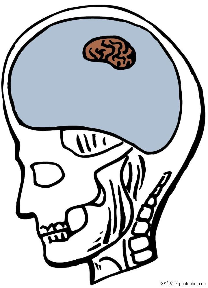 婴儿头骨脑部结构图