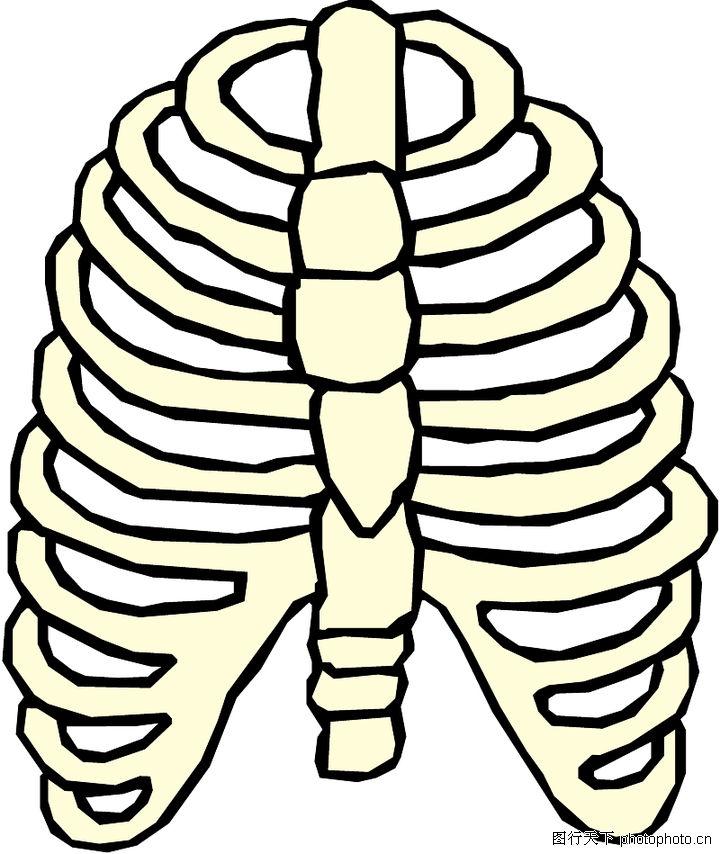 身体部位结构图名称图