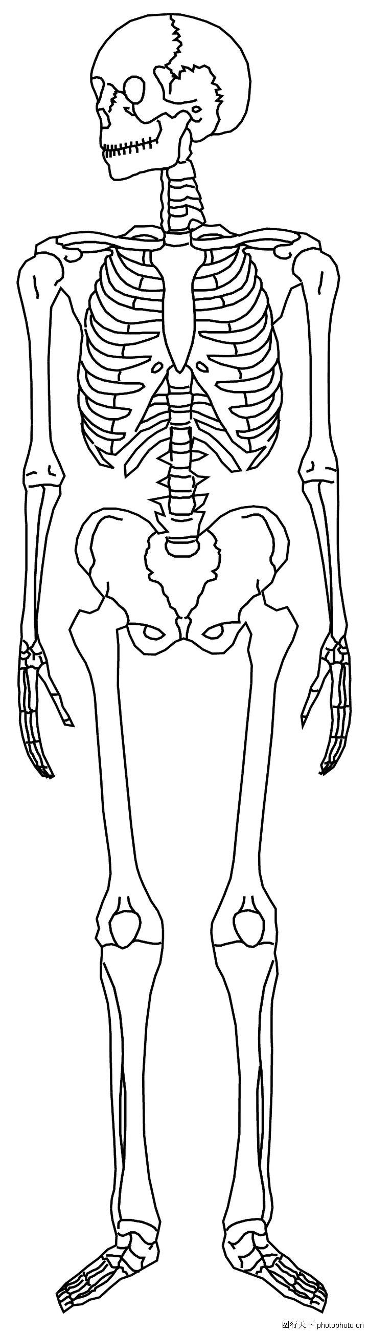 手绘人体格临图