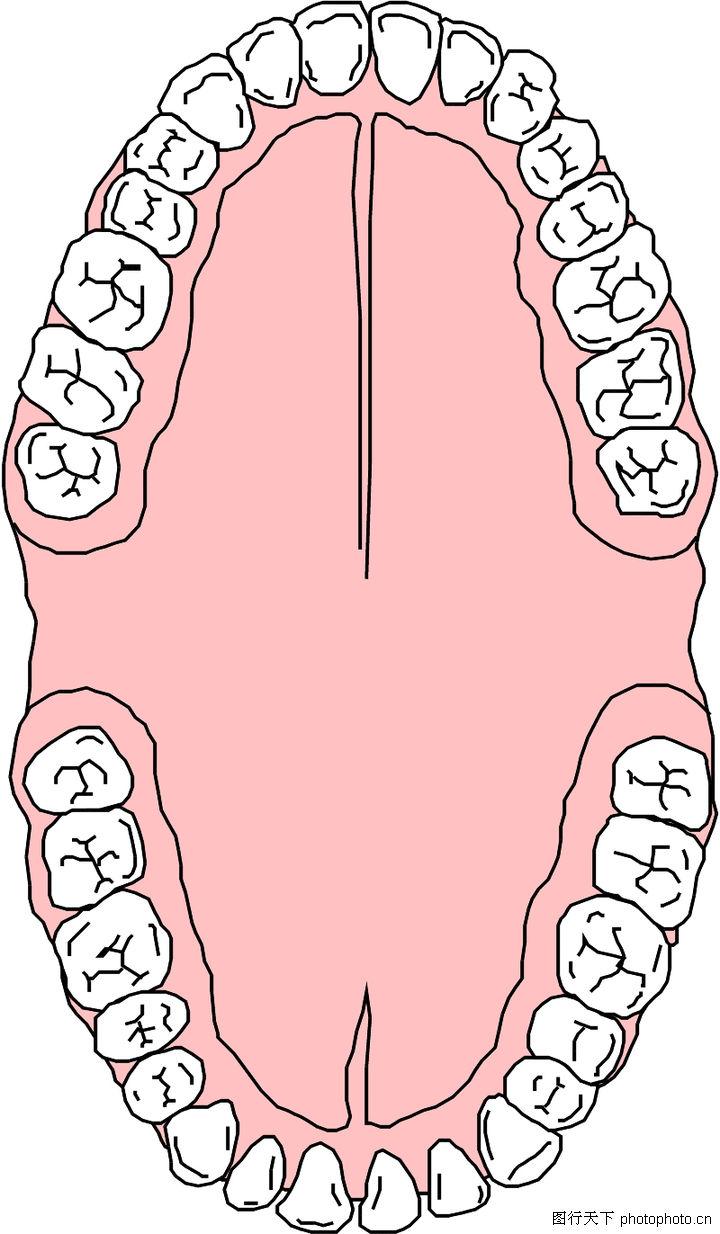 牙齿结构图片可爱