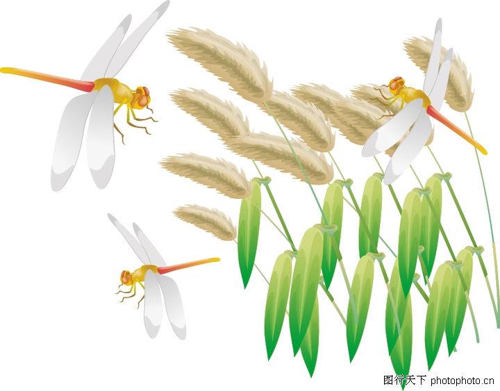 可爱蜻蜓卡通画
